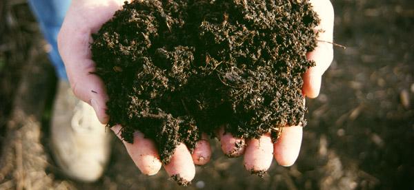 Compost: het zwarte moestuin-goud