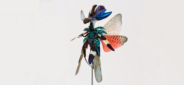 Sprookjesachtige insectenelfjes van Cedric Laquieze