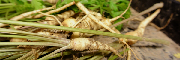 de volle grond, I love eco blog, csa, lokaal, groentenabonnement, Tielrode, seizoensgroenten, bioboer
