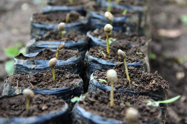 I love eco blog, Koffie Kàn, slow coffee, koffie verhaal, koffie bessen