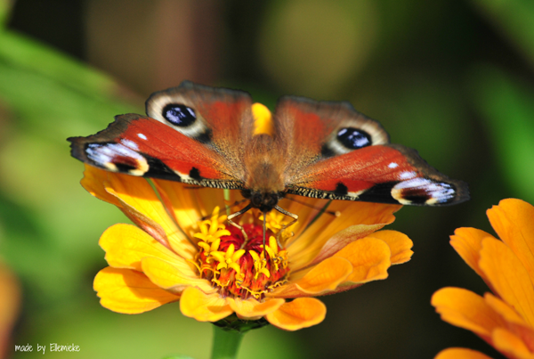 I love eco blog, Ellemieke, gastblog, natuurfoto's