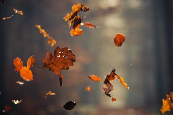 i love eco blog, herfst, herstsfeer, wat te doen in de herfst,
