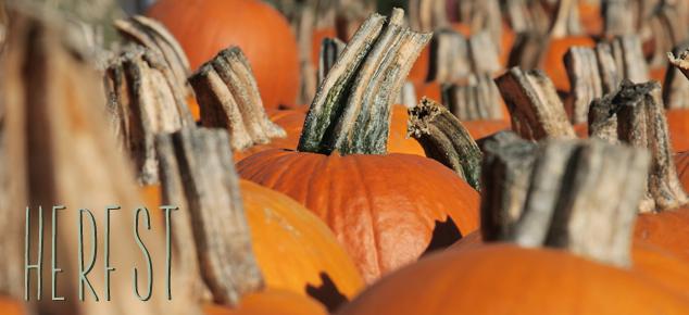 10 redenen om uit te kijken naar de herfst!