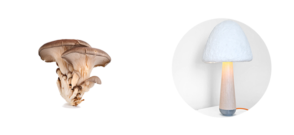 i love eco blog,paddestoelen,lamp, verpakking