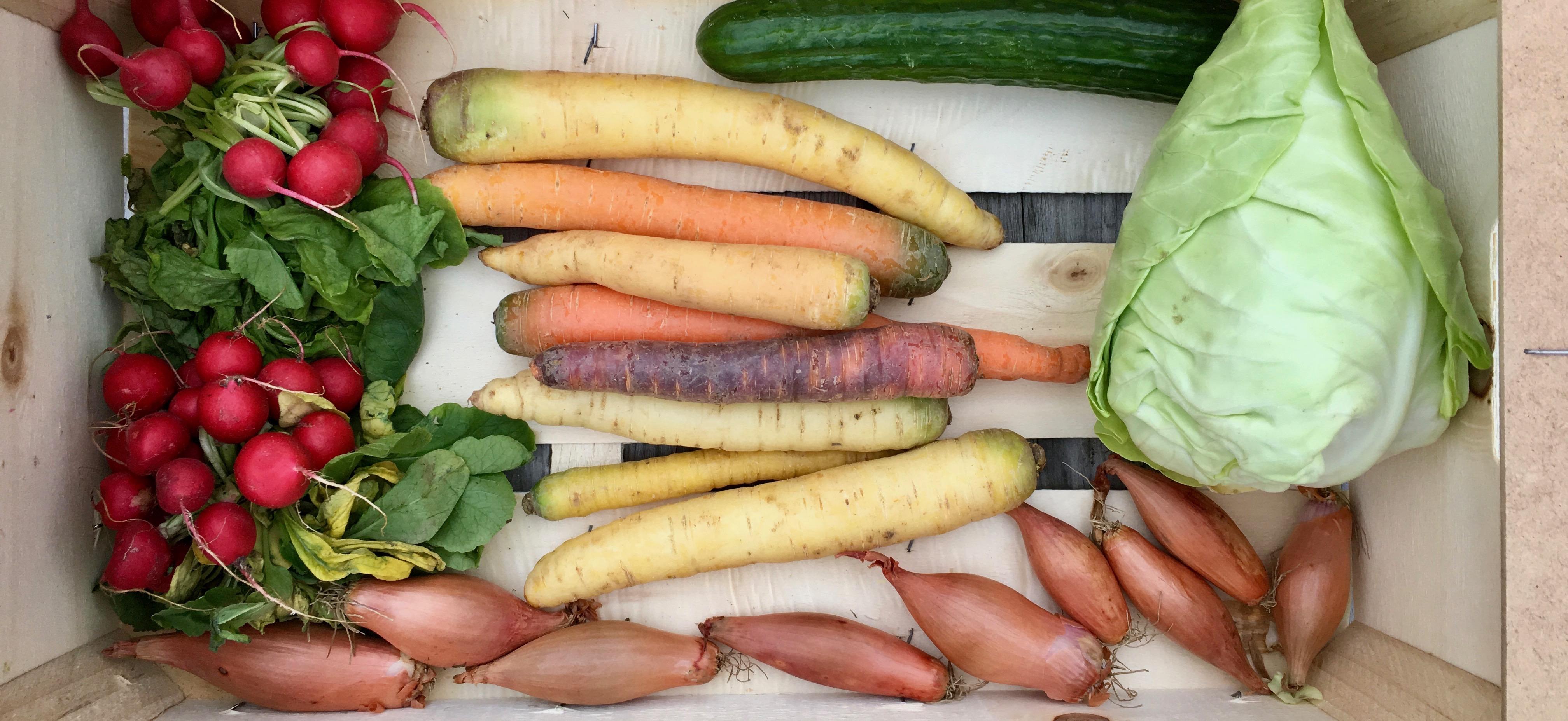 Wat maak je met een groentepakket? #7