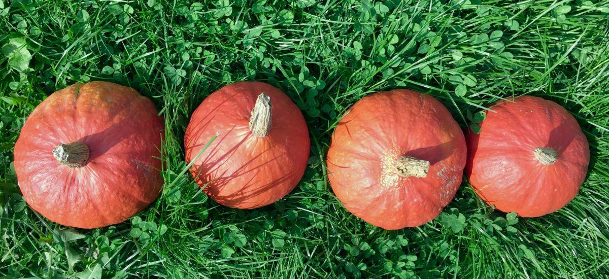 Herfst in de keuken: mijn vijf favoriete herfstrecepten