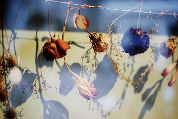 I Love Eco Blog Bloemenkunst van Judith de Vries