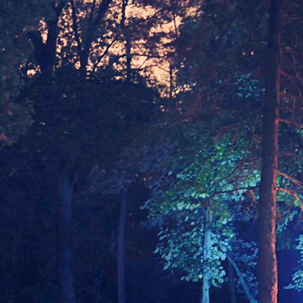 Filmavondje in het bos