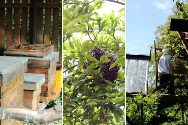 I love eco, weleda, weleda tuinen, natuurcosmetica, I love eco blog, ecotuin, ecologisch tuinieren, zoetermeer