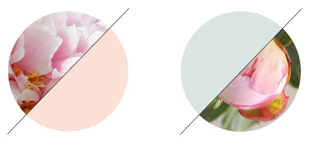 Pioenroos, een vleugje rozengeur