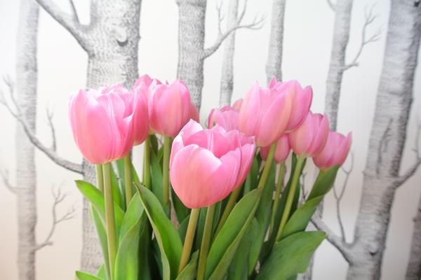 i_love_eco_blog_bloem_tulp_2