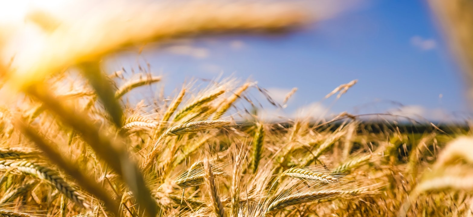 De landbouw van de toekomst; de toekomst van de landbouw?