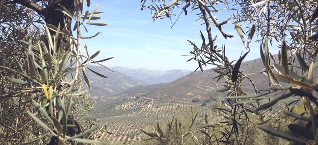 Andalusië: natuur en meer…