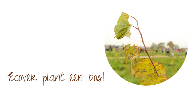 Plant-a-tree met Ecover en Bos+