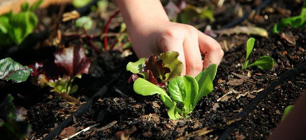 Gastblog Avalon: ode aan bio eten op school