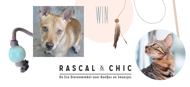 Win een ecospeeltje van Rascal & Chic voor je hond of kat!
