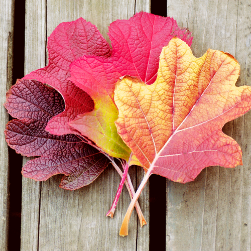 Vandaag begint de herfst!
