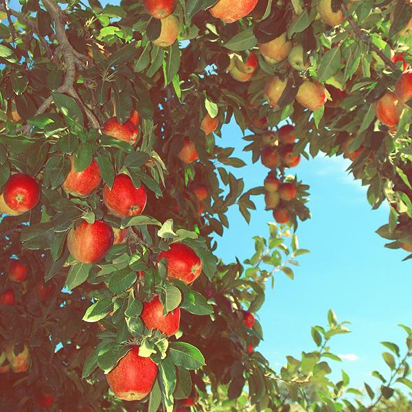 De mobiele fruitpers perst al jouw fruit