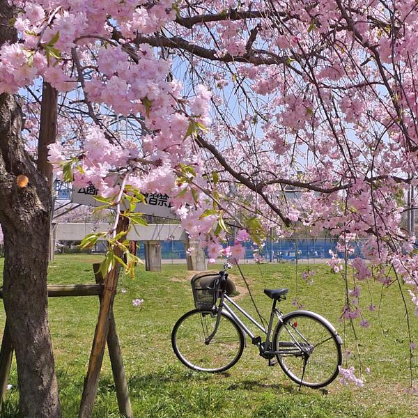 Trek erop uit om de lentebloesems te bewonderen