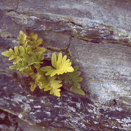 Winter versus lente in onze prachtige Ardennen